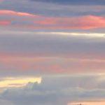 sunset_tree, Lopez_Island, San_Juan_islands