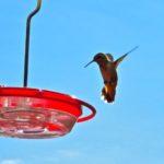 Hummingbird_feeder, hovering_hummingbird, La_Grande_OR