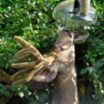 deer_at_bird_feeder, bird_feeder_deer