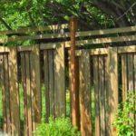 wild_turkeys, backyard_turkeys, La_Grande_OR