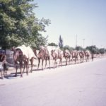 Afghanistan camel train