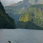 Doubtful Sound dolphin