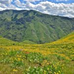 Hells Canyon spring