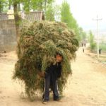 Rural china, Sichuan provence, hay carried on back