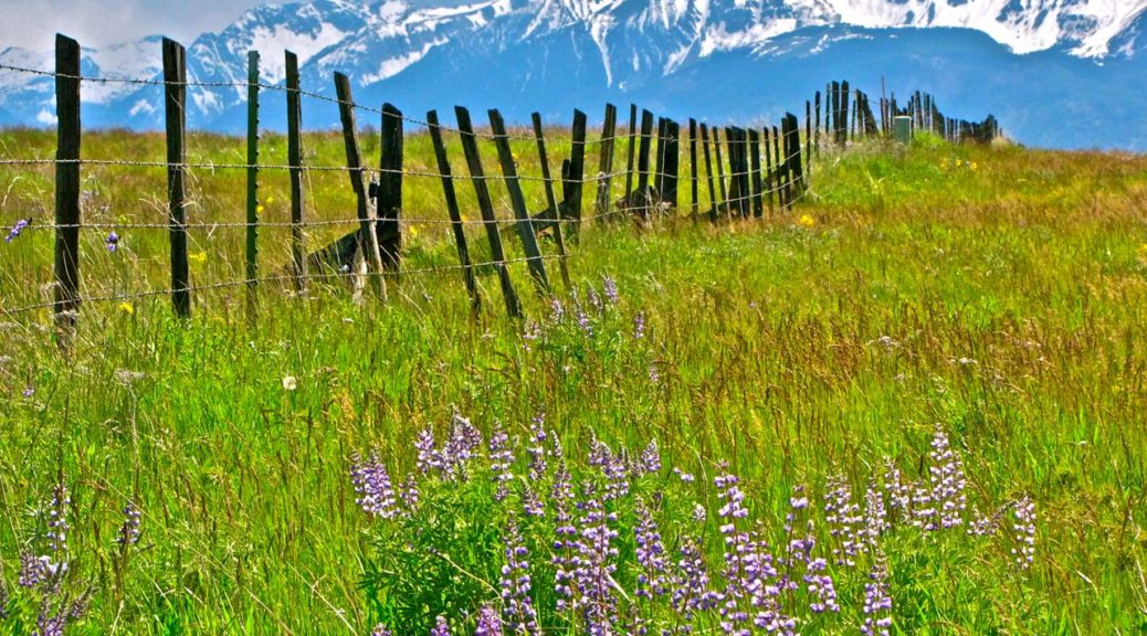 Zumwalt Prairie Wallowa Mts