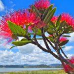 New Zealand. North Island