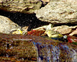 birds-at-waterfall