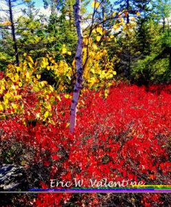 Maine, Petite Moran Wildlife Refuge