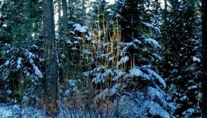 snowy light, MERA