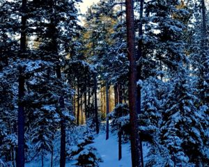 Mt Emily Recreation Area, snowy light