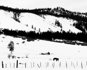 winter horses Union County Oregon