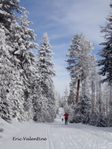 Cross country skiing Meecham Divide
