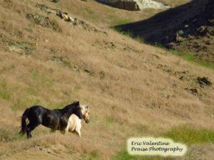 Honeycomb country. wild horses