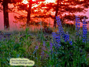 Hells Canyon lupine sunrise
