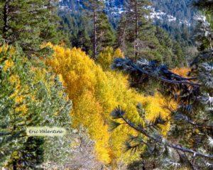 Carson Pass CA