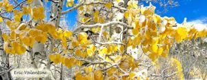 Sorensen's, Aspen leaves snow pano
