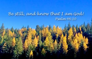 Psalm 46:10, fall larch