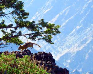 Saddle creek campground oregon wallowa county hat point hells canyon hells canyon