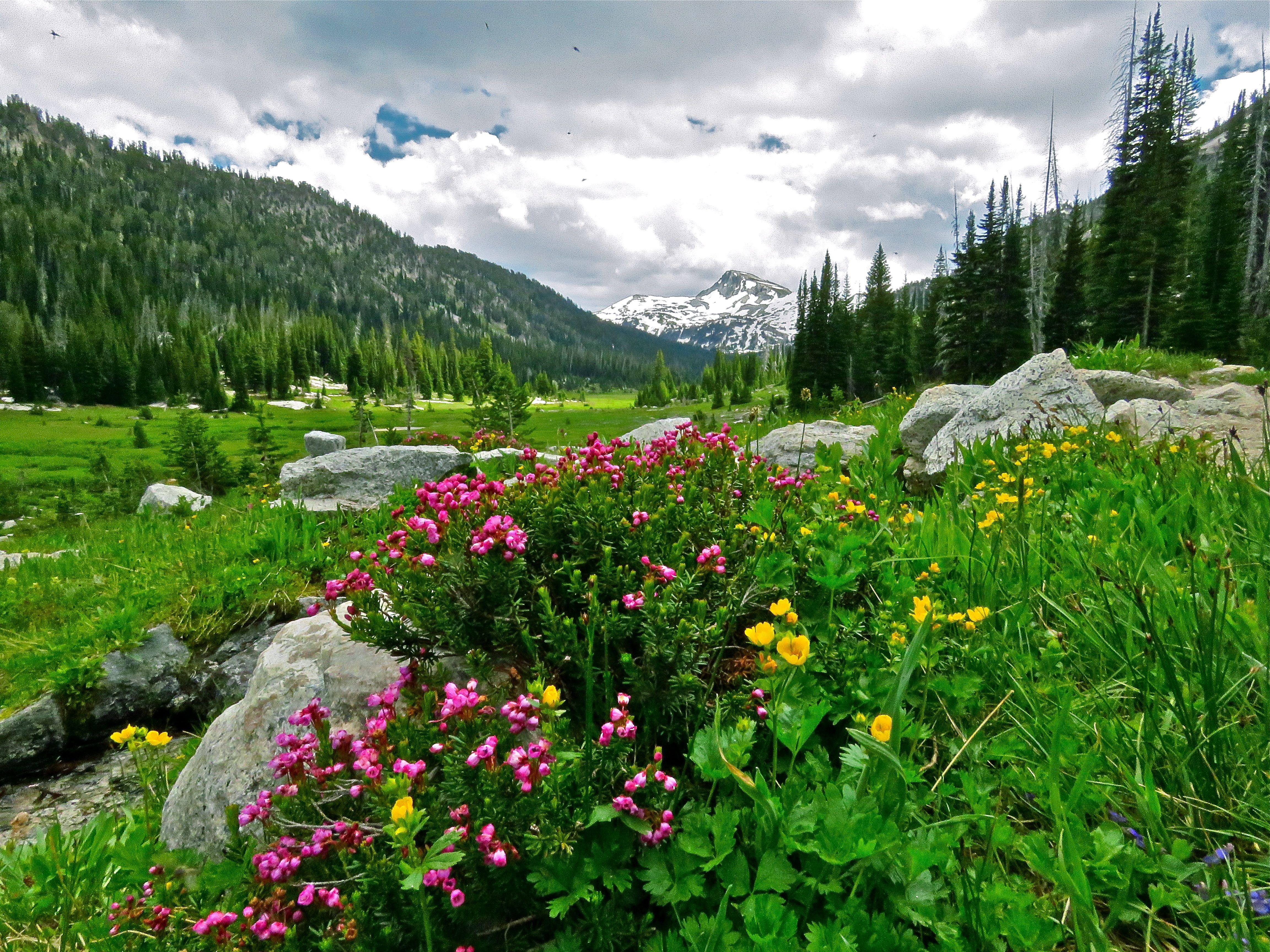 Eagle cap wilderness wildflowers