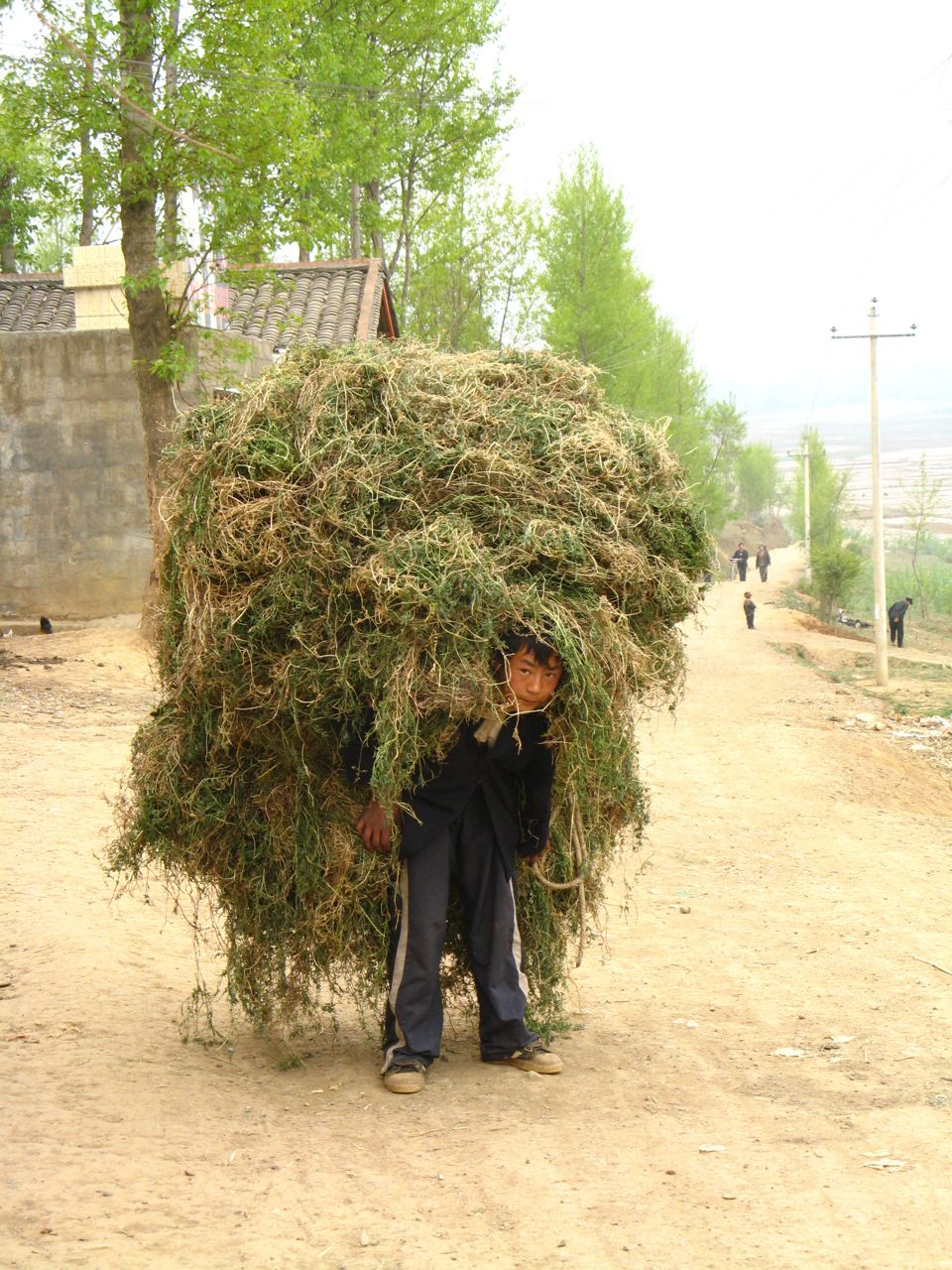Rural china sichuan provence hay carried on back