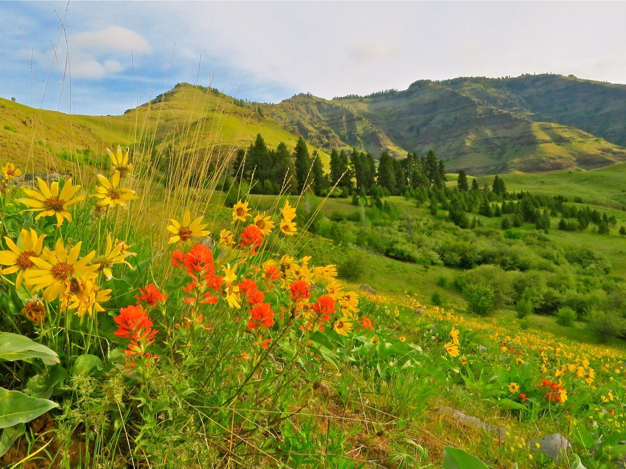 Snake river hells canyon wilderness
