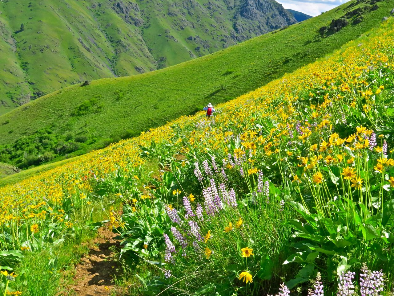 Spring creek trail hells canyon