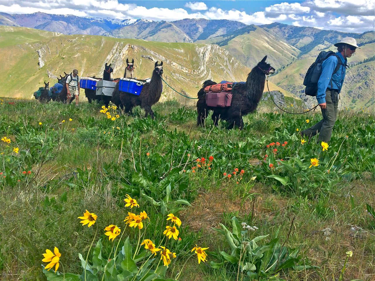 Wallowa llamas hells canyon