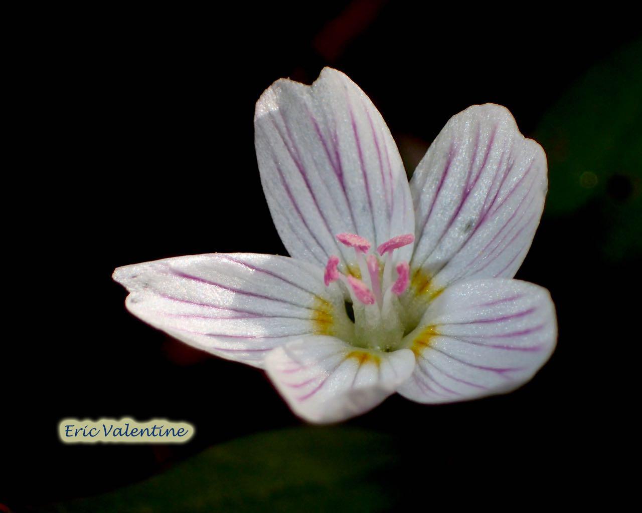 White flower wm