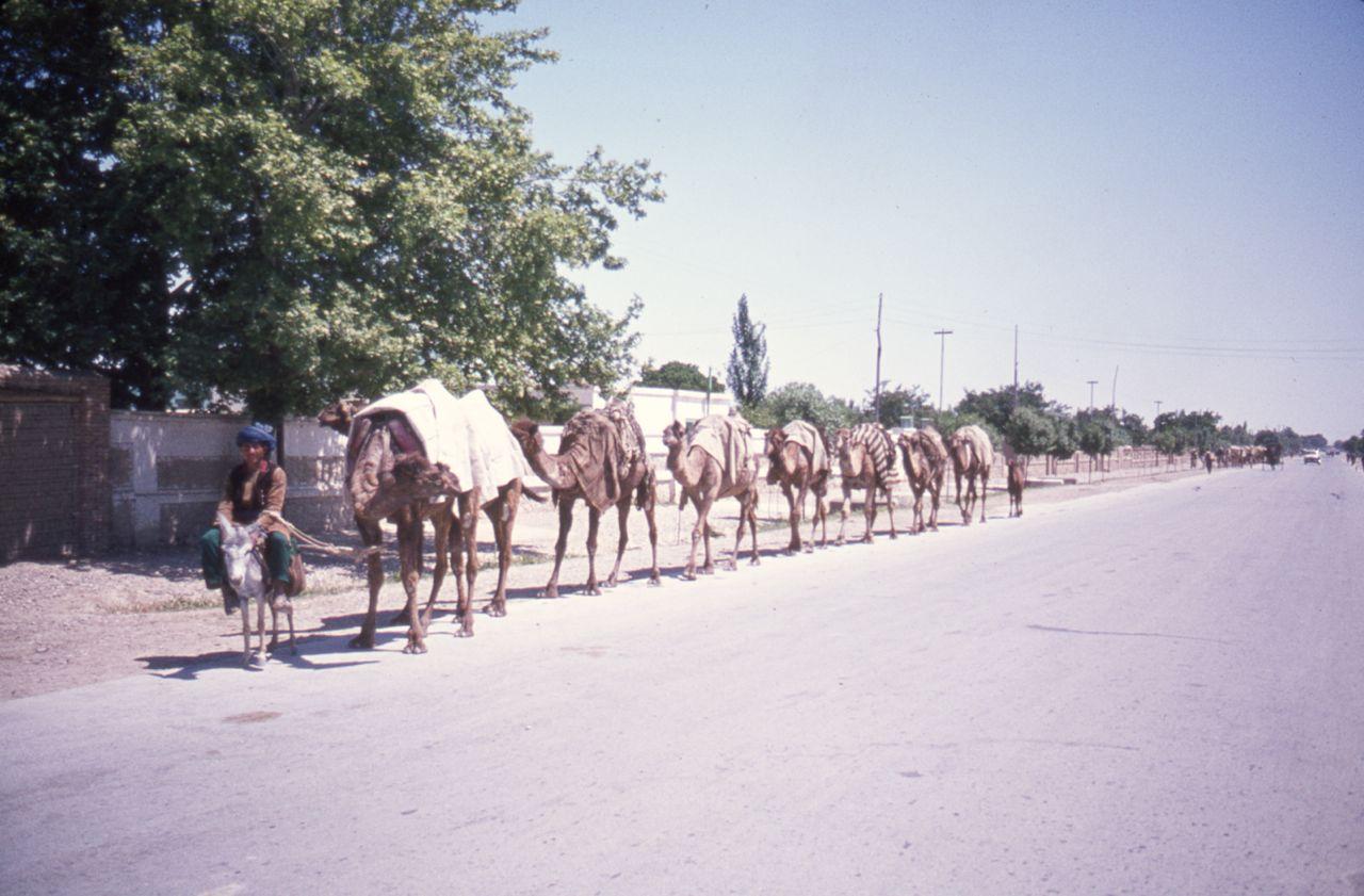 Afghanistan camel train