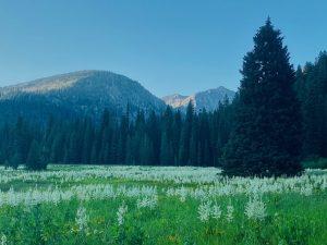 West eagle meadows 1