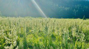 D west meadows 2